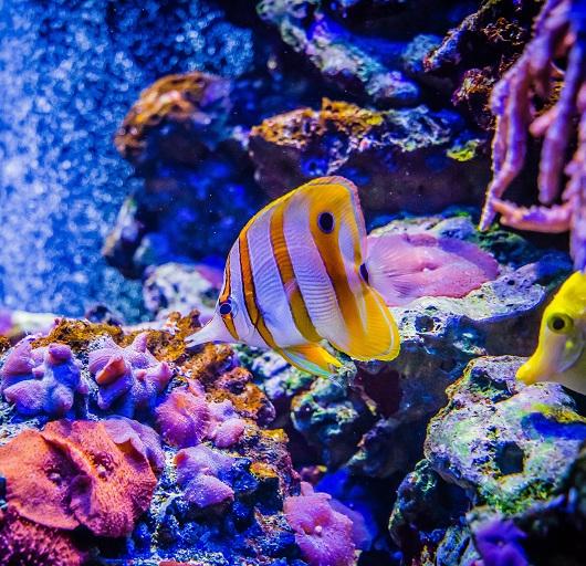 海の世界へ飛び込む 夏の水族館巡り