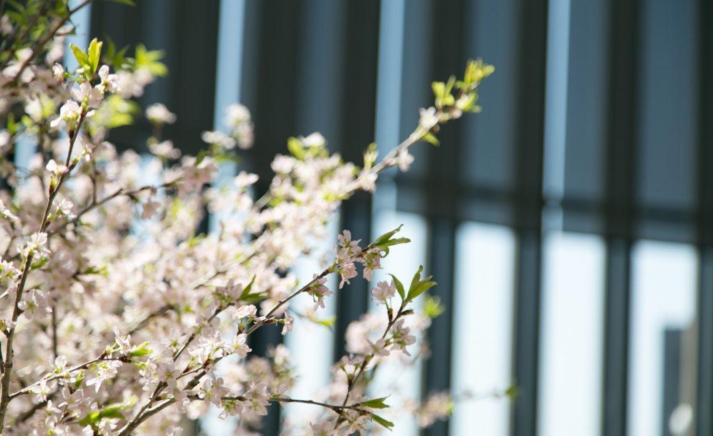 ちょっと贅沢な週末の大人旅<br/>25周年記念「京都プレミアムツアー」