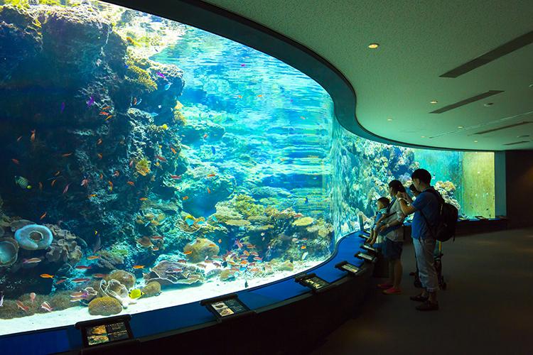 写真提供:海洋博公園・沖縄美ら海水族館