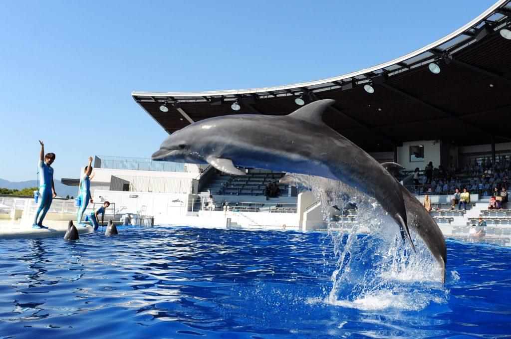 写真提供:京都水族館