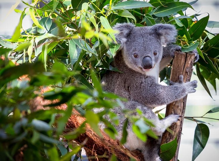 写真提供:Nigel Jarvis/shutterstock.com、Anne Powell/shutterstock.com