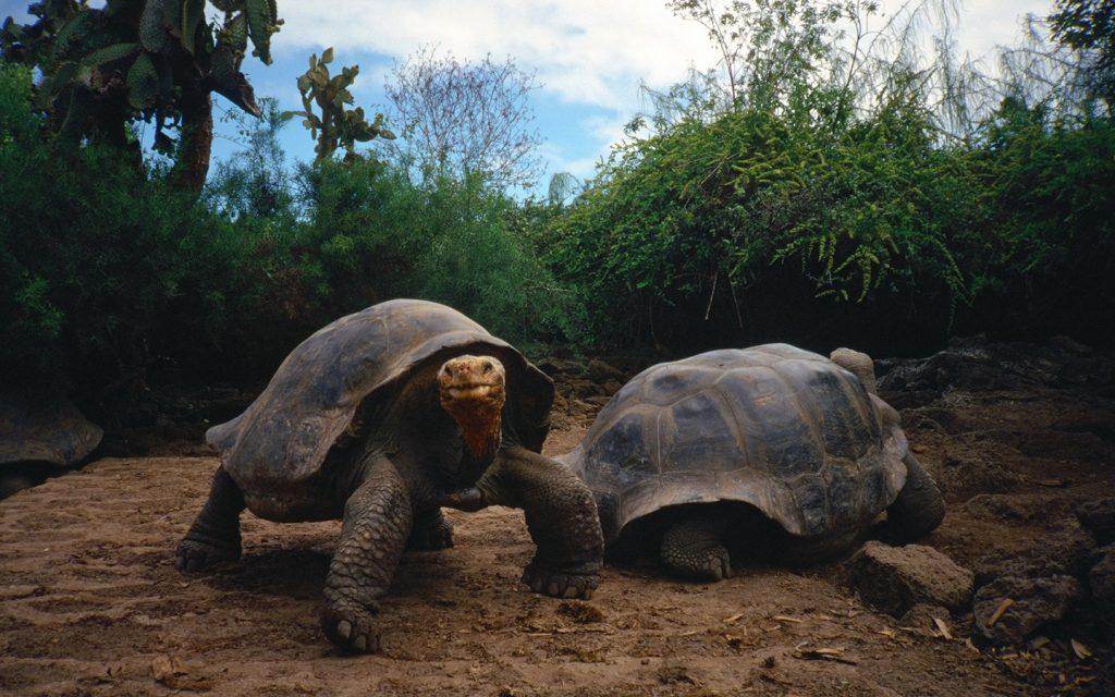 絶海の孤島に暮らす固有の動物たちに会いに行く