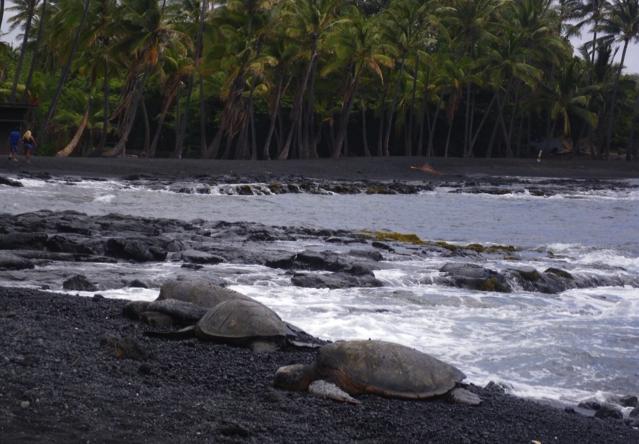 のんびり甲羅干しをするウミガメの姿を見ると、離れたところからでも心癒されます。
