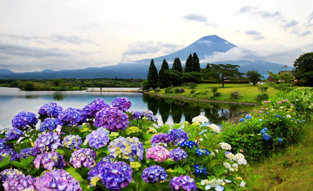あじさいが彩る雄大な富士山