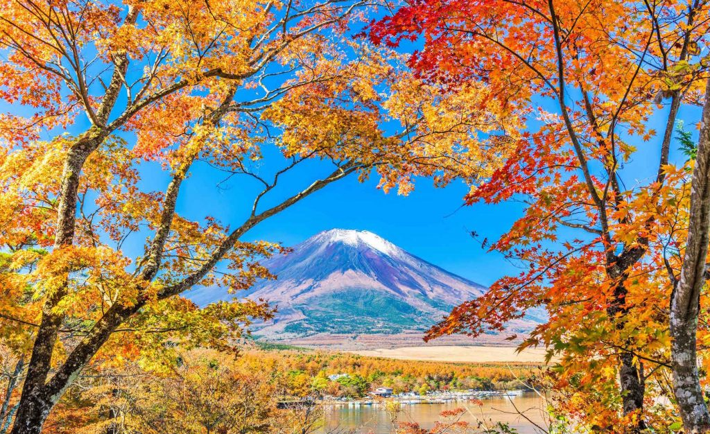 山中湖 花の都公園の紅葉