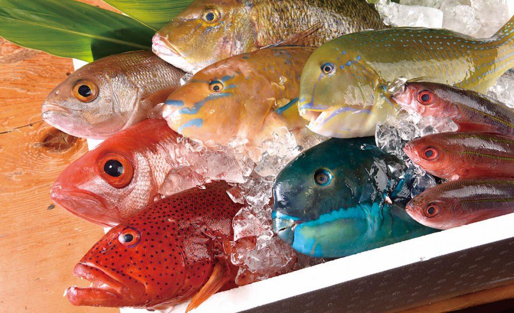 沖縄のカラフルな魚を料理して楽しむ